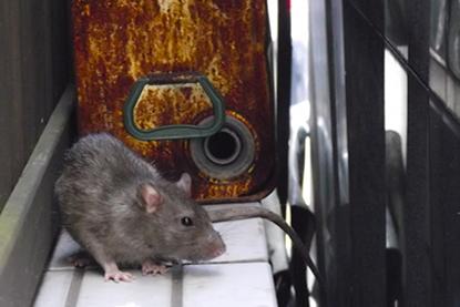 ねずみ・ネズミ駆除はお任せください