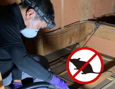 ネズミ駆除に関する独自の研究・調査