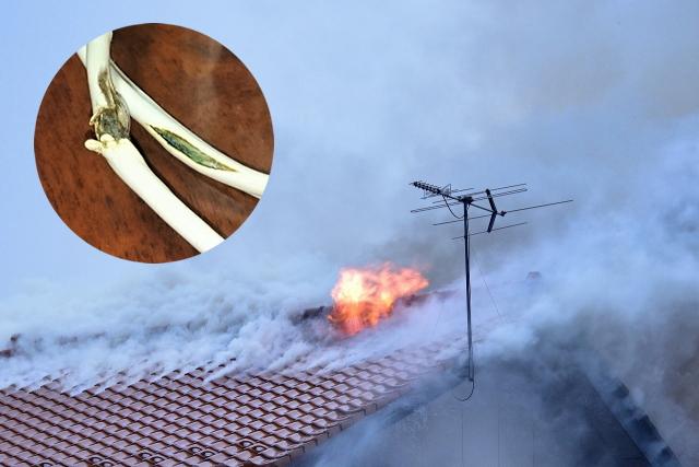 ねずみによる被害|停電や火災を起こす