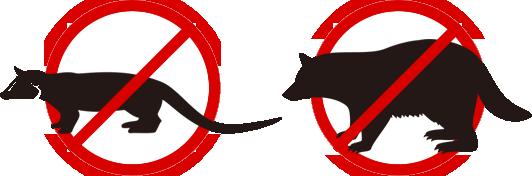 アライグマ・ハクビシン駆除|アライグマやハクビシンが住み着いたら深刻な糞尿被害、ノミ・ダニ被害の原因に