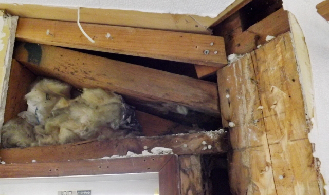 感染症や悪臭、天井のシミ、ノミ・ダニ被害など様々な被害を及ぼします。