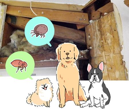 ペットにも注意が必要です|また、庭など屋外で飼育されているペットにも接触する機会もある為、注意が必要です。